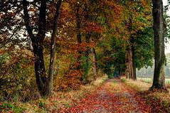 Autumn path (frata60) Tags: nikon d300s drenthe netherlands nederland landscape landschap autumn herfst path eelde trees red rood bos forest hdr highdynamicrange 1224mm tokina colors couleurs