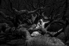 Der Erlknig - The Erl-King (dlorenz69) Tags: evil spirit bse geister island insel afrika africa senegal dakar ledemadeleine black white experiment ghost haunted spuk verwunschen verflucht fairytale mrchen legende legend halloween grusel horror joke scherz humor monochrome bw baobab tree roots baum wurzeln