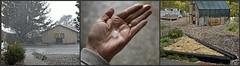Hail Storm (Oh Ya, Winter's Here..Bring Snow Plz!) Tags: storm hail large hand frontyard backyard