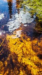 20160811_125853-1 (Andre56154) Tags: schweden sweden sverige wasser water bach flus river stream pflanze spiegelung reflexion reflection