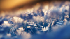 fire and ice (Rainer Schund) Tags: fire ice natur nature nikond4 makro macro nahaufnahme morgen morgens morning eisblumen reif raureif bokeh