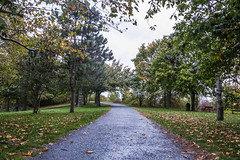 Through the Trees (Evan's Life Through The Lens) Tags: camera 5d mark mk iii three 3 lens glass 2470mm f28 outside rain wet weather gloomy clouds exposure digital blue green cold autumn 2016
