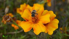 Φύση (foula.tsitipidou) Tags: λουλούδια στη φύση