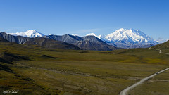 The Road to Denali (Alfred J. Lockwood Photography) Tags: alfredjlockwood nature landscape alaskarange denalinationalpark nationalpark denali summer field tundra clearsky valley morning snow peaks