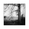 Tree in Acharting (cardijo) Tags: austria österreich salzburg tree baum landscape landschaft winter eis ice ilford fp4 rolleiflex rodinal carlzeiss tessar 6x6 film analog
