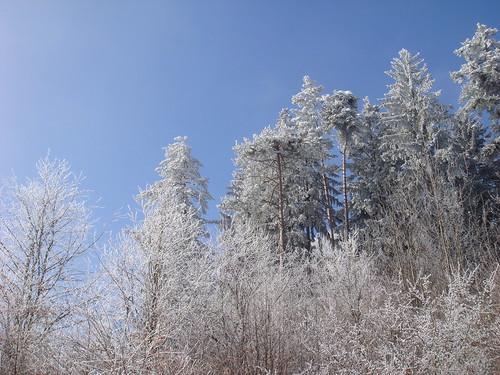 Schneewald auf der Alb