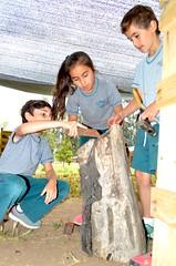 XII Encuentro de Escultores del Valle (Colegio Valle del Aconcagua) Tags: escultores quillota colegio valle del aconcagua