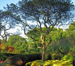 Sunlit Tree (Cher12861 (Cheryl Kelly on ipernity)) Tags: thetree cantignygardens wheatonillinois flowers startofautumncolor landscape nature beauty