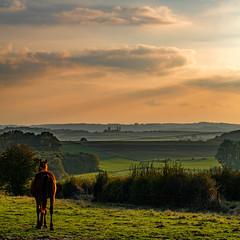2016 10 29 - Sunset-11 (OliGlo1979) Tags: fuji luxembourg xt2 xf50140 landscape sunset horse silhouette