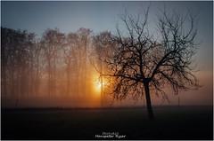 Tree in fog (Hanspeter Ryser) Tags: sunset tree fog vogelang winter stimmung wald baum sonnenuntergang sempachersee switzerland swiss schweiz color innerschweiz impressions hanspeterryser himmel