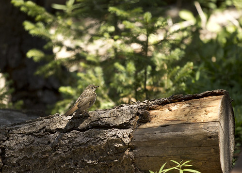 Bird on log