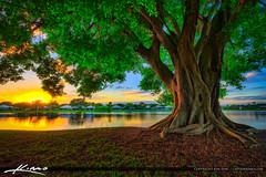 Ficus Tree at Lake Catherine during sunset over Palm Beach Gardens Florida (Captain Kimo) Tags: captainkimo easyhdr florida hdrphotography lake lakecatherine palmbeachcounty palmbeachgardens sunset ficustree