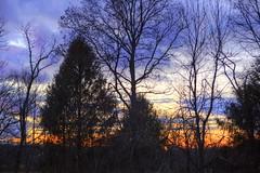 November Skies (Sunset Sailor) Tags: november sunset newengland treeline