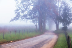 A Sparks Lane Morning (ShutterByMe) Tags: appalachia appalachian beauty cades country countryside cove dirtroad fence field fog foggylandscape forest gatlinburg great greatsmokymountains greatsmokymountainsnationalpark green gsmnp landscape lane morning mountain mountains national nationalpark nature outdoor park pasture road rural scenery scenic smokey smokeymountains smokies smoky smokymountains sparks sparkslane tennessee thegreatsmokeymountainsnationalpark tn travel trees valley