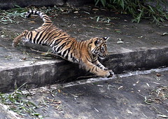 Ze ZOO Praha 2011 (sebjozef) Tags: zoo praha prague prag praga animal