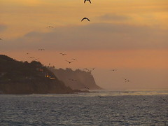 Flocking to the Cliffs (Kelson) Tags: sunset ocean california southerncalifornia southbay beach birds cliffs palosverdes