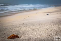 IMG_3699_12-4-16_Orange Beach, AL (Mo-Pump) Tags: gulfofmexico gulfcoast alabamacoast alabama orangebeach al beach boardwalk alabamapoint