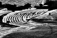 Curve (luporosso) Tags: natura nature naturaleza naturalmente nikond300s nikon iamdifferent nikonitalia bianconero biancoenero blackandwhite blackwhite blancoynegro noiretblanc monocromatico monochrome monocromo monocrome contrsto marche italia italy texture geometrie geometry artofimages fineartphotos allaperto