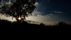 2016 10 29 - Sunset-2 (OliGlo1979) Tags: fuji luxembourg xt2 xf1655 landscape sunset horse silhouette