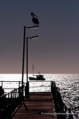 Kingscote Pier - Kangaroo Island, Australia (My Planet Experience) Tags: bay boat fishing natural cove south au parks australia pelican granite nepean reserves attraction kangarooisland oceania stockphotography kingscote wwwmyplanetexperiencecom myplanetexperience