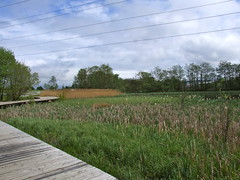 Walkway over newly created bog land (nz_willowherb) Tags: park industrial land bog falkirk reclaimed thehelix