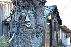 V i s a g e (day0_0dreamer) Tags: tree deutschland blackforest bernau