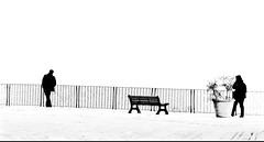 non più capace d'esser solo (rossolev) Tags: mediterraneo italia mare paz pd bn persone pax pace zia adriatic abruzzo lev adriaticsea adriatico peli zorba veltroni pecora perugiaassisi costadeitrabocchi frentania roccasangiovanni babbeo αθήνα maradriatico pecoranera zanotelli ladridibiciclette trapanare pecoraio yourcountry fuoridalleballelalega lutrabocchdiorlando adriaticoselvaggio turbocapitalismo legistipuzzoni leprivatizzazionisonounaputtanata calcinculoamarchionneeinipotiniagnelli liberismocloaca οφιλελευθερισμόσείναιημαλακία leputtanatedigrillo comunquevolevosvelarvichecasaleggioèfeltriconlaparrucca lomosessualitàundonodidio belusconiahahah ahgrillochescemo ieriamilanohovistobobovieri