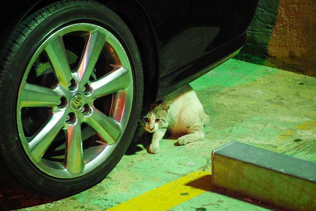 Today's Cat@2014-05-28