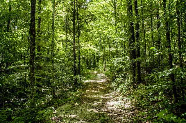 Hoosier National Forest - Lick Creek Trail - June 17, 2014