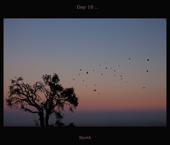 Day .. 10 (.ByOtA.) Tags: life sky music tree love colors leaves birds leaving wings peace song spirit branches horizon memories soul omar damascus immigration fairouz byota canoneosrebelt1i omarmaro mylastdaysindamascus