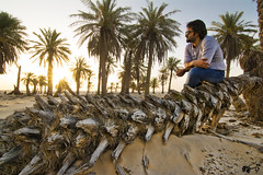 #صورة#تصويري#بعدسة#بعدستي#سيلفي#سلفي#السعودية#الشرقية#مزرعة#نخيل#صبح#الصباح#شروق#الشمس#موديل#نيكون#nikon#saudi#sand#nice#model#pic#sunrise#sun#farm#palmtree#good#wow#me#my#photo#i# (shahsh0b) Tags: sun me sunrise wow photo nice model sand nikon good farm pic palmtree saudi صورة الصباح تصويري السعودية مزرعة شروق الشمس صبح بعدستي نيكون بعدسة نخيل موديل الشرقية سلفي سيلفي
