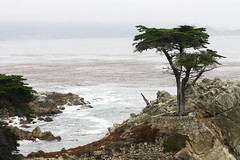 Lone Cypress (Eno-Masah) Tags: california west tree beach nature cali landscape drive coast monterey pacific pebble lone 17 cypress mile