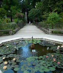 L'Orto Botanico di Padova, Italy... (_nejire_) Tags: sky italy reflection tree water pond waterlily waterlilies botanicgarden ricoh padova ricohgrdigital3 lortobotanicodipadova