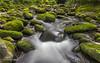 Mossy River (Avisek Choudhury) Tags: bw gitzo greatsmokymountain mossystream canon5dmarkiii avisekchoudhury acratechballhead canon2470mmf28lii avisekchoudhuryphotography gatlibnurg