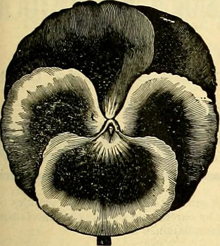 "Image from page 122 of ""The Florists' exchange : a weekly medium of interchange for florists, nurserymen, seedsmen and the trade in general"" (1888)"