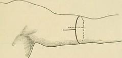 Anglų lietuvių žodynas. Žodis apposition reiškia n 1) pridėjimas; 2) gram. priedėlis lietuviškai.