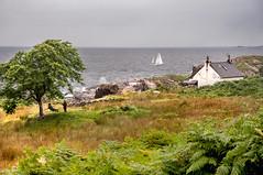 Playtime at Smirisary (RiserDog) Tags: scotland yacht lochaber childrenplaying scottishhighlands moidart glenuig smirisary homemadeswing