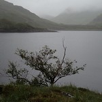 Tree by the loch thumbnail