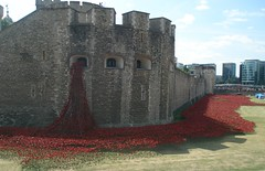 Tower of London. The fallen Soldiers. (margaret.k) Tags: world london tower ceramic 1 war fallen poppies soldires