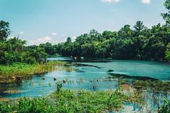 Rainbow River (corran105) Tags: statepark trees water river spring woods nikon raw florida bluesky canoe adobe wilderness canoeing lightroom rainbowriver rainbowsprings d90 nikond90 vsco vscofilm