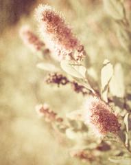 textured softness (t1ggr) Tags: pink plant flower texture nature outdoors soft pastel softness samsung csc softtones mirrorless nx1100