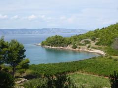 Vineyard, Jelsa (JohnnyHamster) Tags: vineyard croatia hvar jelsa