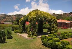 Gazebo con fiori gialli (ticinoinfoto) Tags: flowers fleurs costarica blumen gazebo fiori giardino parchi centroamerica zarcero provinciadealajuela