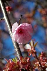 IMGP5646 (Axemaniac-Art) Tags: pink macro tree blossom twothumbsup bigmomma