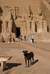 I, Anubis / Ja, Anubis (Vjekoslav1) Tags: dog rock temple egypt pas nubia abusimbel amun hram ramesses ptah rahorakhty stijena ramzes egipat ramzesii nubija 1244bc