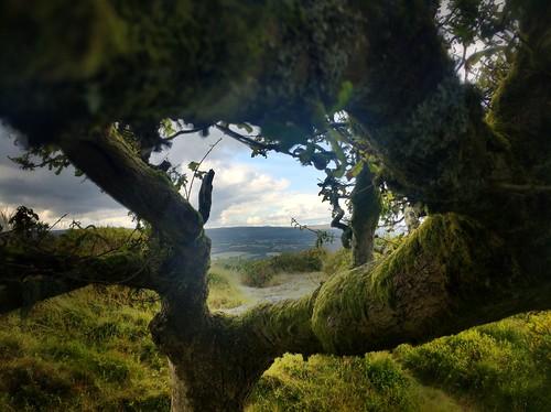 Cranbrook Castle, Dartmoor, Devon
