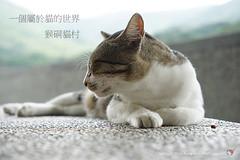 20140907_00455_猴硐貓村 (Redhat/小紅帽) Tags: cat redhat 貓 小紅帽 36mp a7r 猴硐 候硐 貓村 猴洞