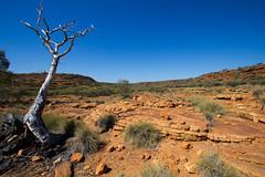 Stand alone (f.rohart) Tags: tree rock canon landscape desert hiking australia deadtree kingscanyon northernterritory australie redcentre canon1022mm
