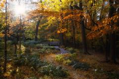 Autumn Gold (karenhunnicutt) Tags: autumn fall fallcolors folliage minneapolisphotographer karenhunnicutt karenmeyer karenhunnicuttphotography minneapolisfineart artandsoulstudios karenhunnicuttphotgraphycom minnesotaautumnt minnesotatourisim