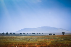 Landscape from a train 2 (Alex Cican ) Tags: summer field train landscape moving romania